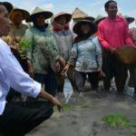 Jokowi memanfaatkan petani untuk pencitraan (IST)