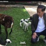 Presiden Jokowi dan kambingnya (IST)