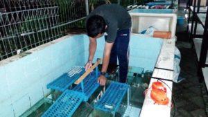 Alat medan listrik sebagai stimulator tumbuh kembang lele (Foto: Humas Universitas Airlangga)
