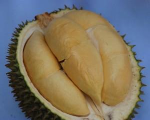 Durian Tanpa Sekat - warungbibitbwi.blogspot.com