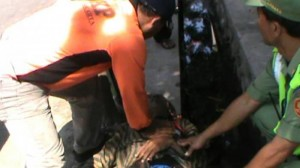 Tukang becak yang meninggal saat mengantarkan tamu pernikahan anak Presiden Jokowi (IST)