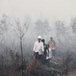 Jokowi masuk hutan yang terbakar (ANTARA)