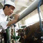 Jokowi berada di kapal ternak (IST)
