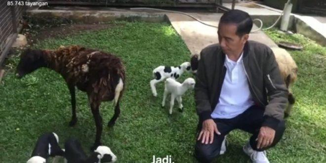 Jokowi Protes Warga Daerah Selalu Mengadu ke Dirinya, Netizen: Pak Presiden Main Kambing Saja